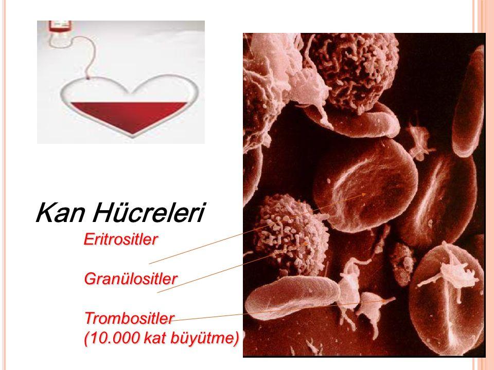 Eritrositler Granülositler Trombositler (10.000 kat büyütme) Kan Hücreleri Eritrositler Granülositler Trombositler (10.000 kat büyütme)