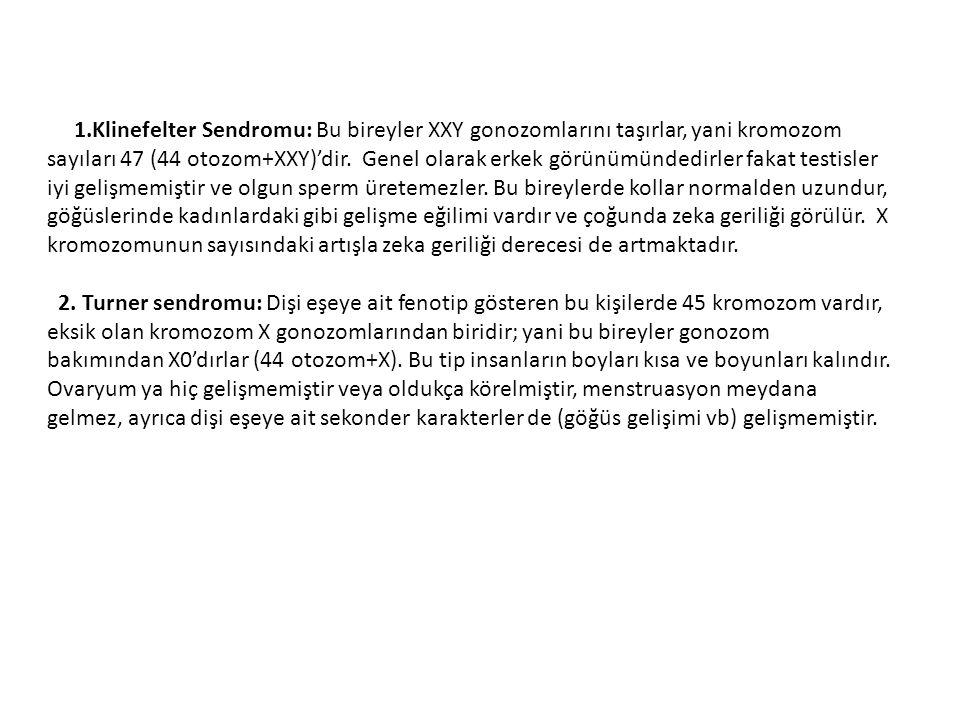 1.Klinefelter Sendromu: Bu bireyler XXY gonozomlarını taşırlar, yani kromozom sayıları 47 (44 otozom+XXY)'dir.