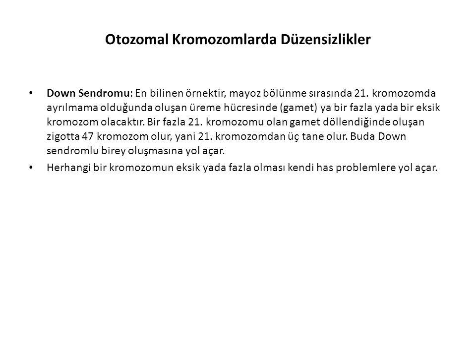 Otozomal Kromozomlarda Düzensizlikler Down Sendromu: En bilinen örnektir, mayoz bölünme sırasında 21. kromozomda ayrılmama olduğunda oluşan üreme hücr
