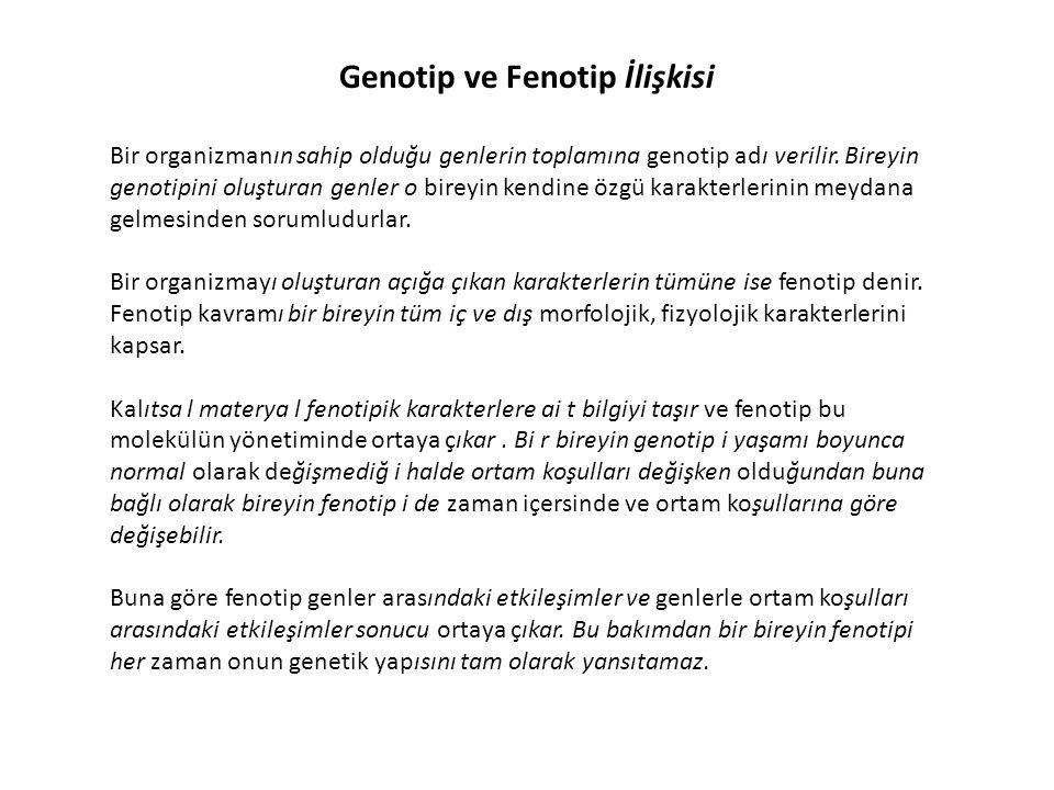 Genotip ve Fenotip İlişkisi Bir organizmanın sahip olduğu genlerin toplamına genotip adı verilir. Bireyin genotipini oluşturan genler o bireyin kendin