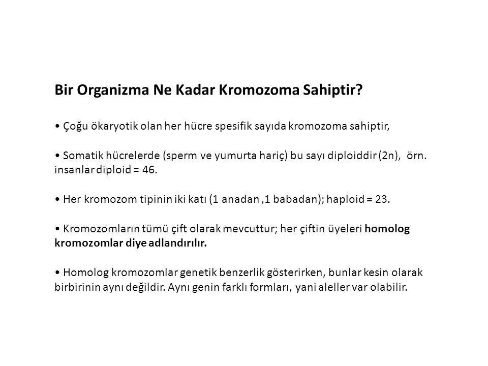 Bir Organizma Ne Kadar Kromozoma Sahiptir.