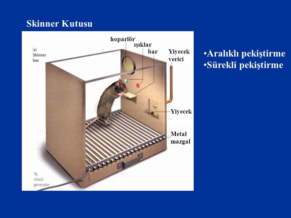 Skinner Kutusu hoparlör ışıklar barYiyecek verici Yiyecek Metal mazgal Aralıklı pekiştirme Sürekli pekiştirme