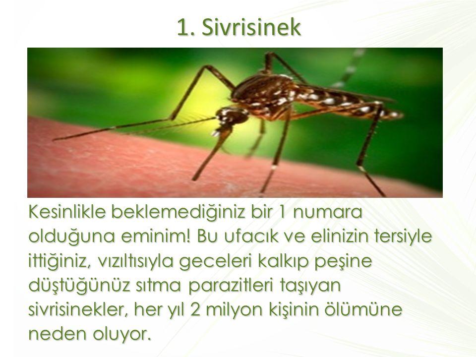 1. Sivrisinek Kesinlikle beklemediğiniz bir 1 numara olduğuna eminim! Bu ufacık ve elinizin tersiyle ittiğiniz, vızıltısıyla geceleri kalkıp peşine dü