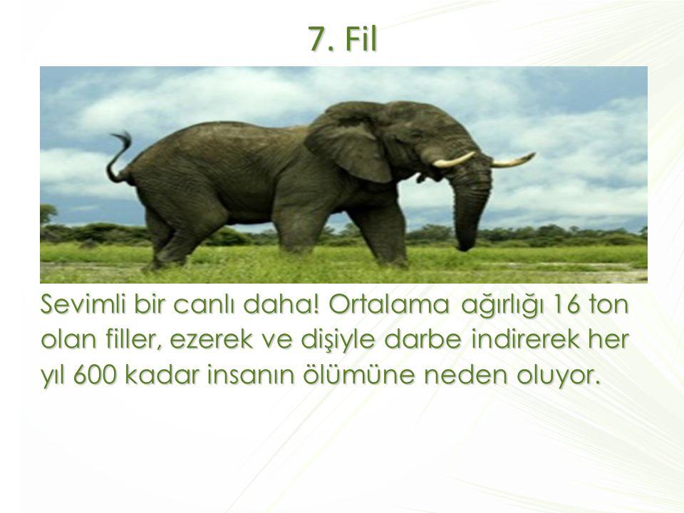 7. Fil Sevimli bir canlı daha! Ortalama ağırlığı 16 ton olan filler, ezerek ve dişiyle darbe indirerek her yıl 600 kadar insanın ölümüne neden oluyor.