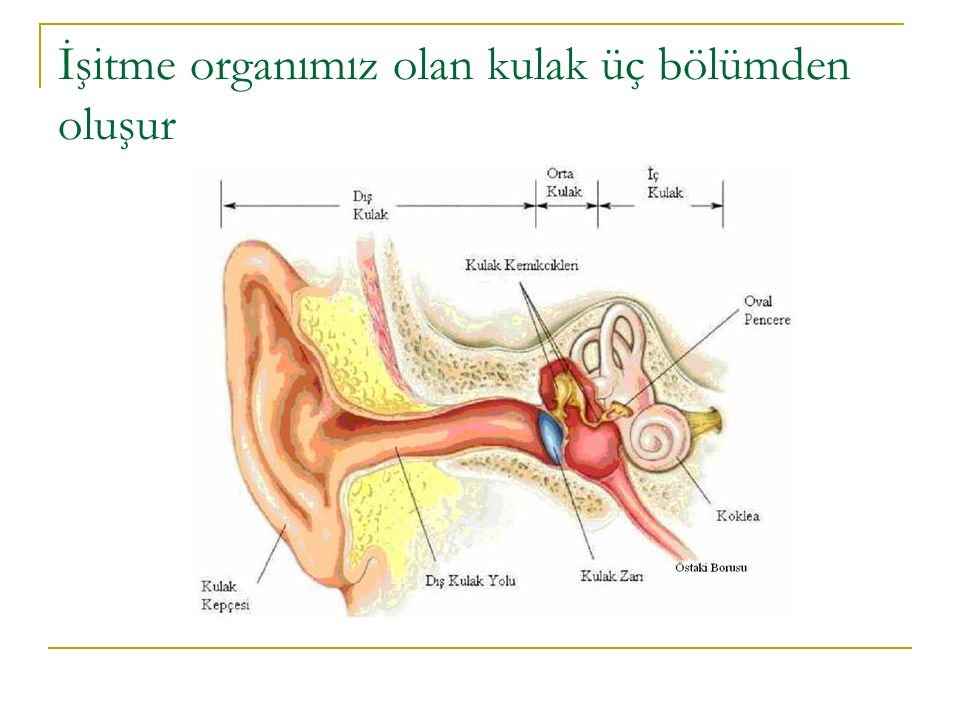 İŞİTME KAYIPLARI N.SENSORİYAL 1.Konjenital Sebepler 2.