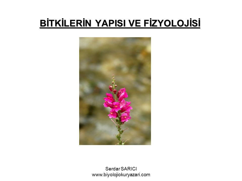 BİTKİLERİN YAPISI VE FİZYOLOJİSİ Serdar SARICI www.biyolojiokuryazari.com