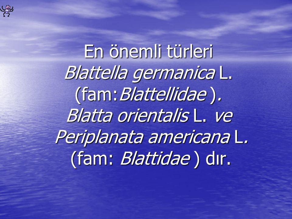 En önemli türleri Blattella germanica L. (fam:Blattellidae ). Blatta orientalis L. ve Periplanata americana L. (fam: Blattidae ) dır.