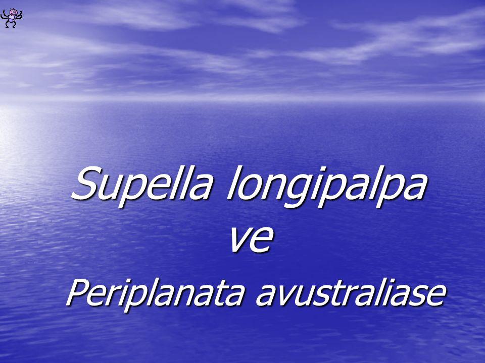 Supella longipalpa ve Periplanata avustraliase