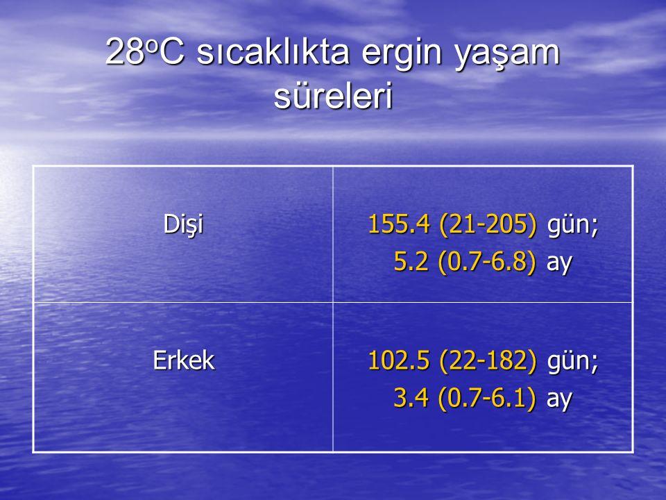 28 o C sıcaklıkta ergin yaşam süreleri Dişi 155.4 (21-205) gün; 5.2 (0.7-6.8) ay Erkek 102.5 (22-182) gün; 3.4 (0.7-6.1) ay