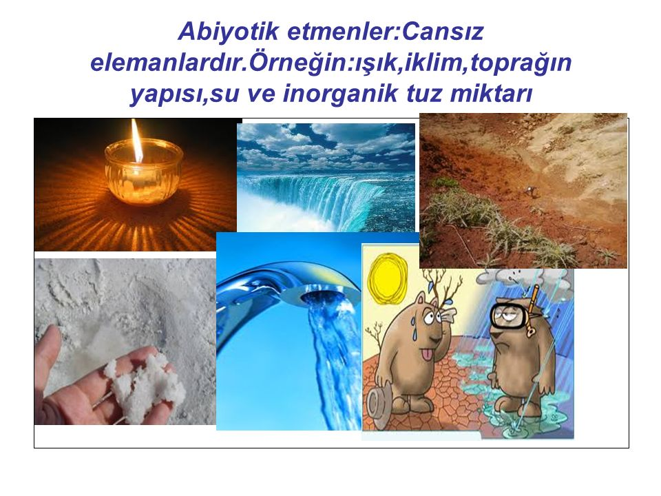 Abiyotik etmenler:Cansız elemanlardır.Örneğin:ışık,iklim,toprağın yapısı,su ve inorganik tuz miktarı