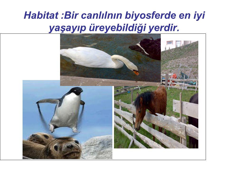 Habitat :Bir canlılnın biyosferde en iyi yaşayıp üreyebildiği yerdir.