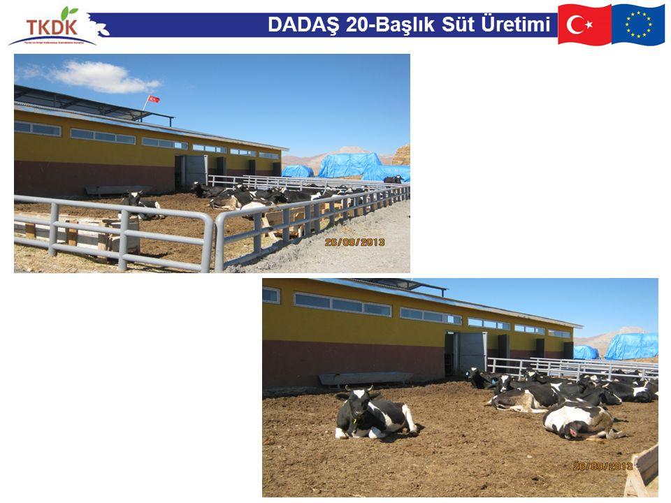 DADAŞ 20-Başlık Süt Üretimi 43