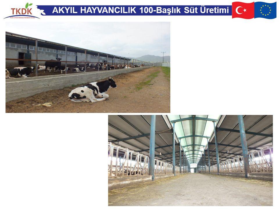 AKYIL HAYVANCILIK 100-Başlık Süt Üretimi 44