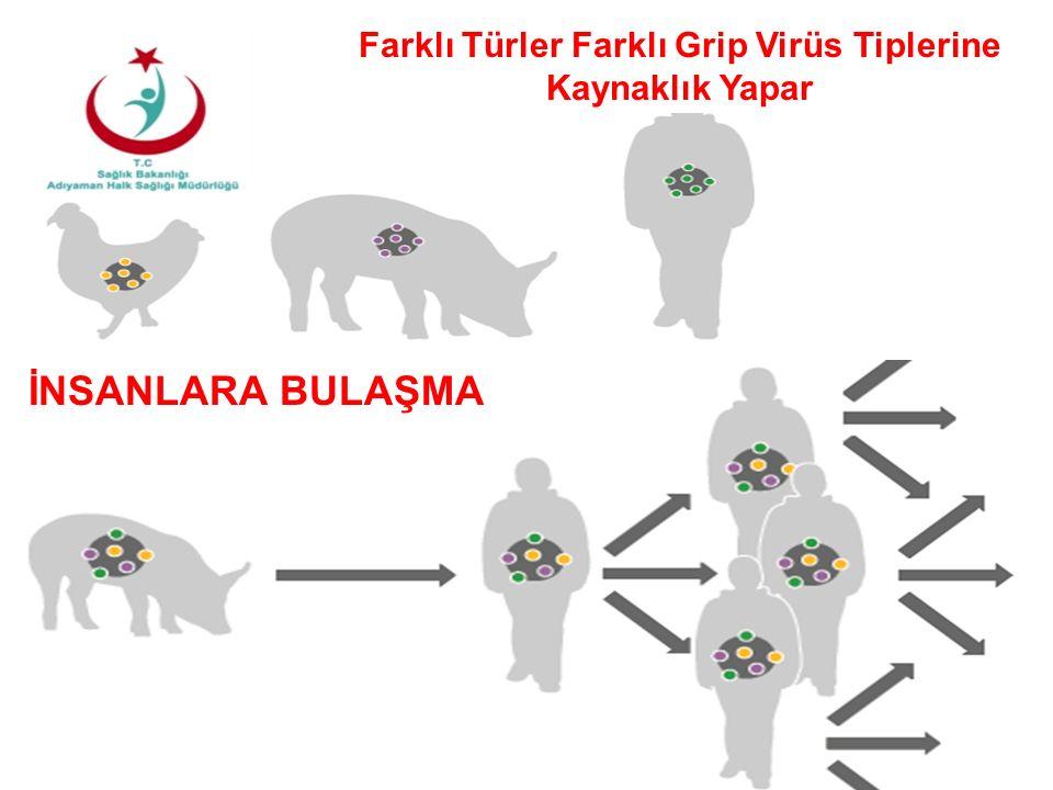 11 İNSANLARA BULAŞMA Farklı Türler Farklı Grip Virüs Tiplerine Kaynaklık Yapar