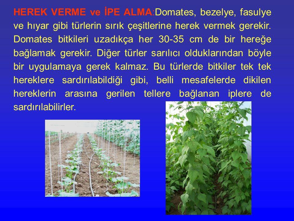 HEREK VERME ve İPE ALMA:Domates, bezelye, fasulye ve hıyar gibi türlerin sırık çeşitlerine herek vermek gerekir. Domates bitkileri uzadıkça her 30-35