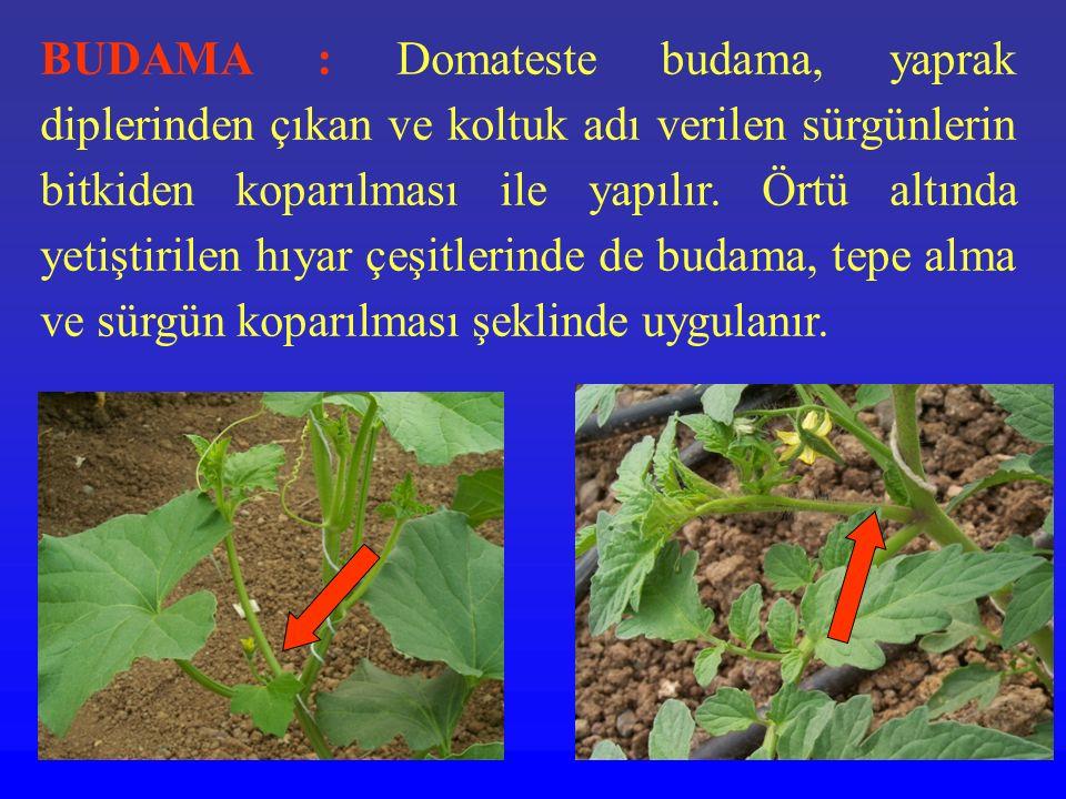 BUDAMA : Domateste budama, yaprak diplerinden çıkan ve koltuk adı verilen sürgünlerin bitkiden koparılması ile yapılır. Örtü altında yetiştirilen hıya