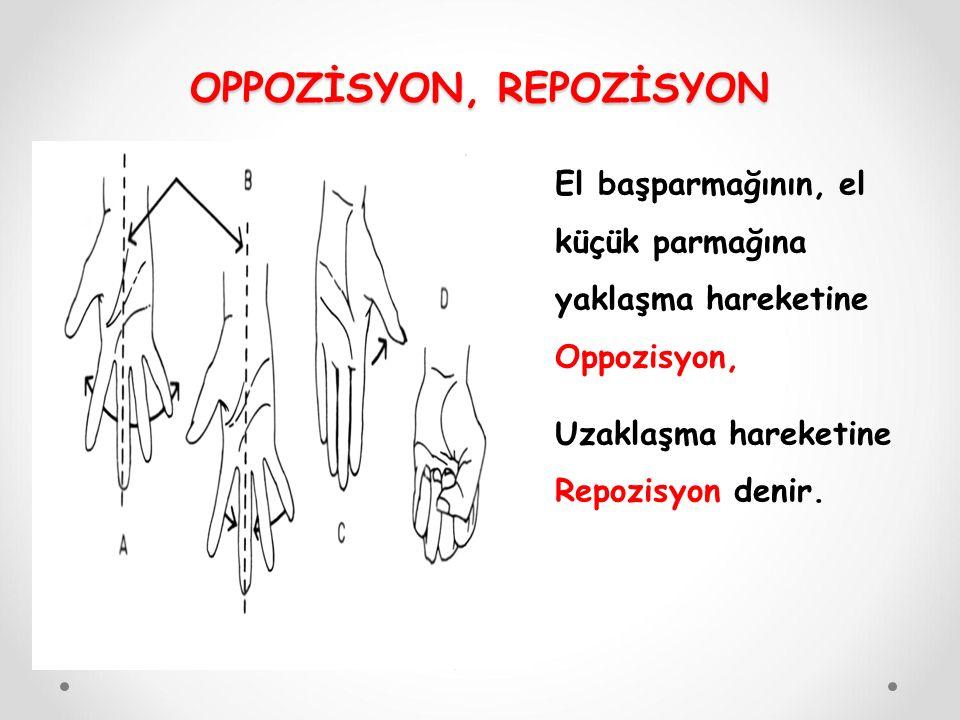 El başparmağının, el küçük parmağına yaklaşma hareketine Oppozisyon, Uzaklaşma hareketine Repozisyon denir. OPPOZİSYON, REPOZİSYON