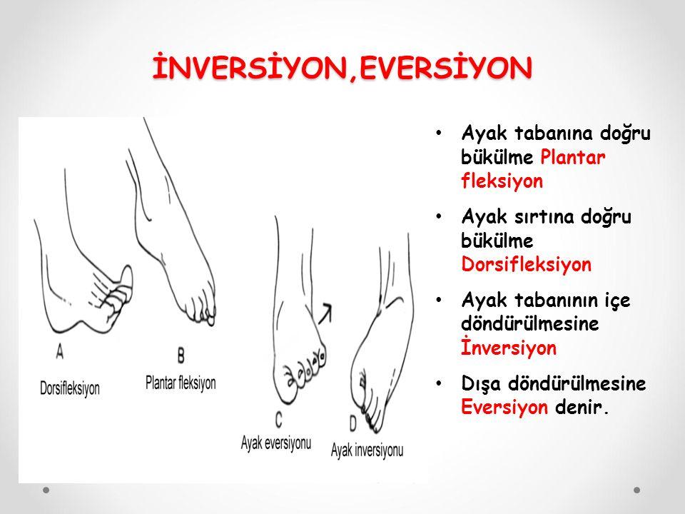 Ayak tabanına doğru bükülme Plantar fleksiyon Ayak sırtına doğru bükülme Dorsifleksiyon Ayak tabanının içe döndürülmesine İnversiyon Dışa döndürülmesine Eversiyon denir.