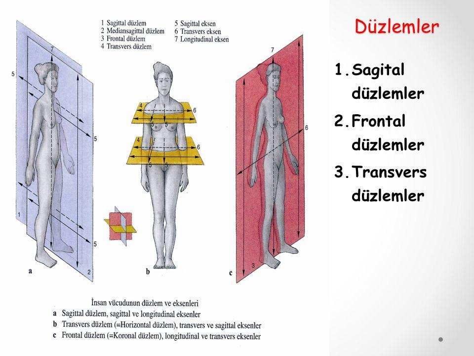 Düzlemler 1.Sagital düzlemler 2.Frontal düzlemler 3.Transvers düzlemler