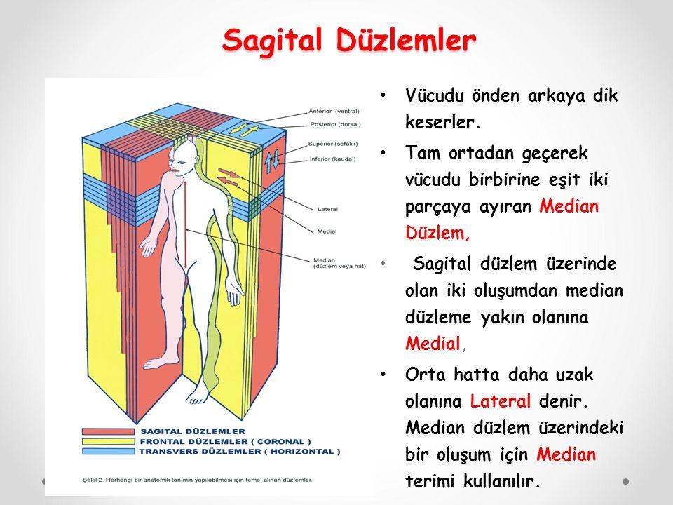 Sagital Düzlemler Vücudu önden arkaya dik keserler. Tam ortadan geçerek vücudu birbirine eşit iki parçaya ayıran Median Düzlem, Sagital düzlem üzerind