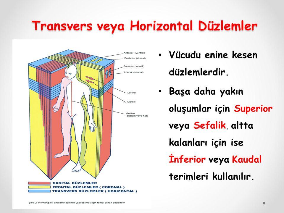 Transvers veya Horizontal Düzlemler Transvers veya Horizontal Düzlemler Vücudu enine kesen düzlemlerdir. Başa daha yakın oluşumlar için Superior veya
