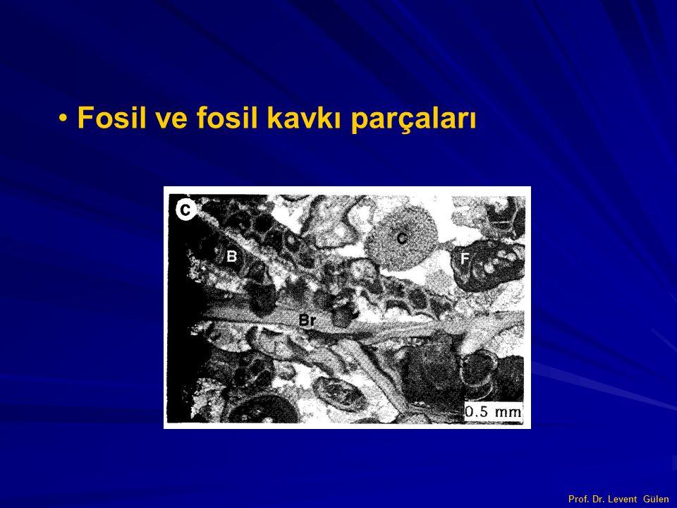 Fosil ve fosil kavkı parçaları Prof. Dr. Levent Gülen