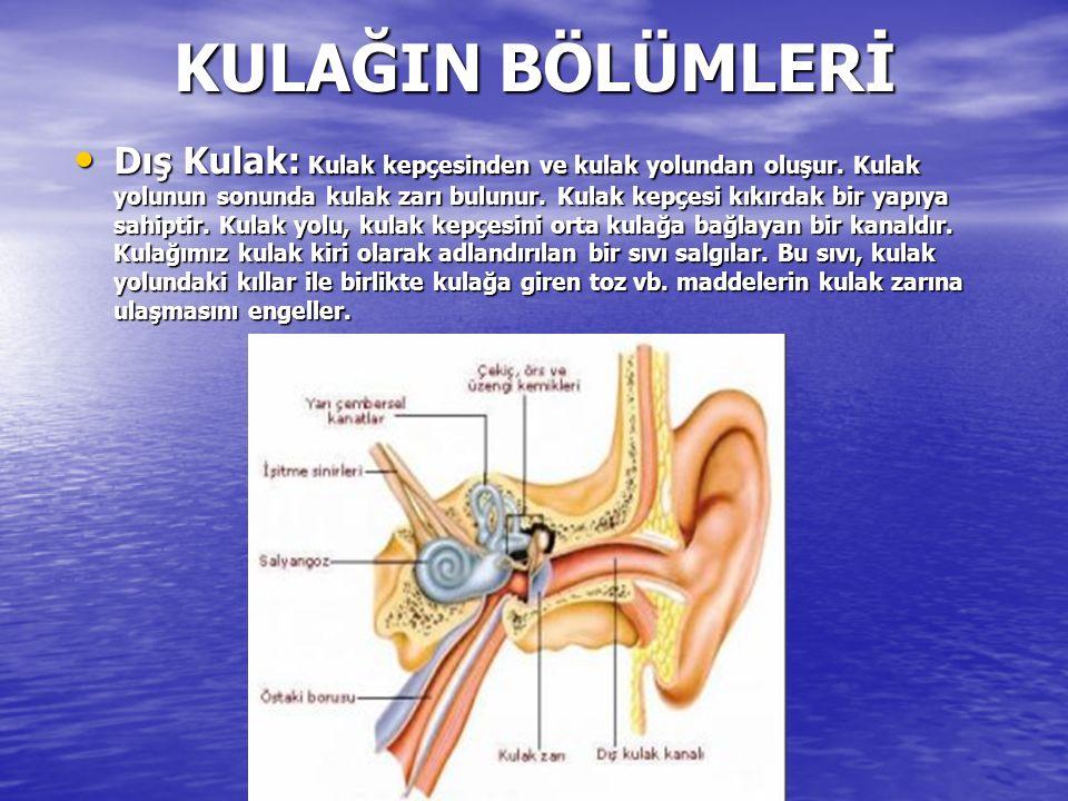 KULAĞIN BÖLÜMLERİ Dış Kulak: Kulak kepçesinden ve kulak yolundan oluşur.