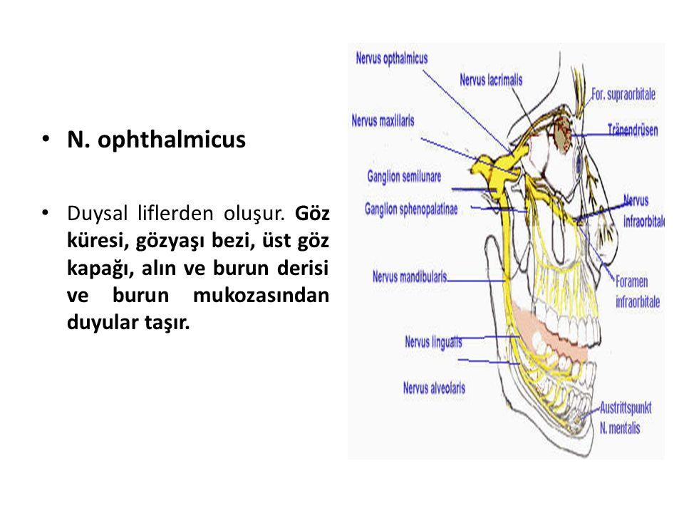 N.ophthalmicus Duysal liflerden oluşur.