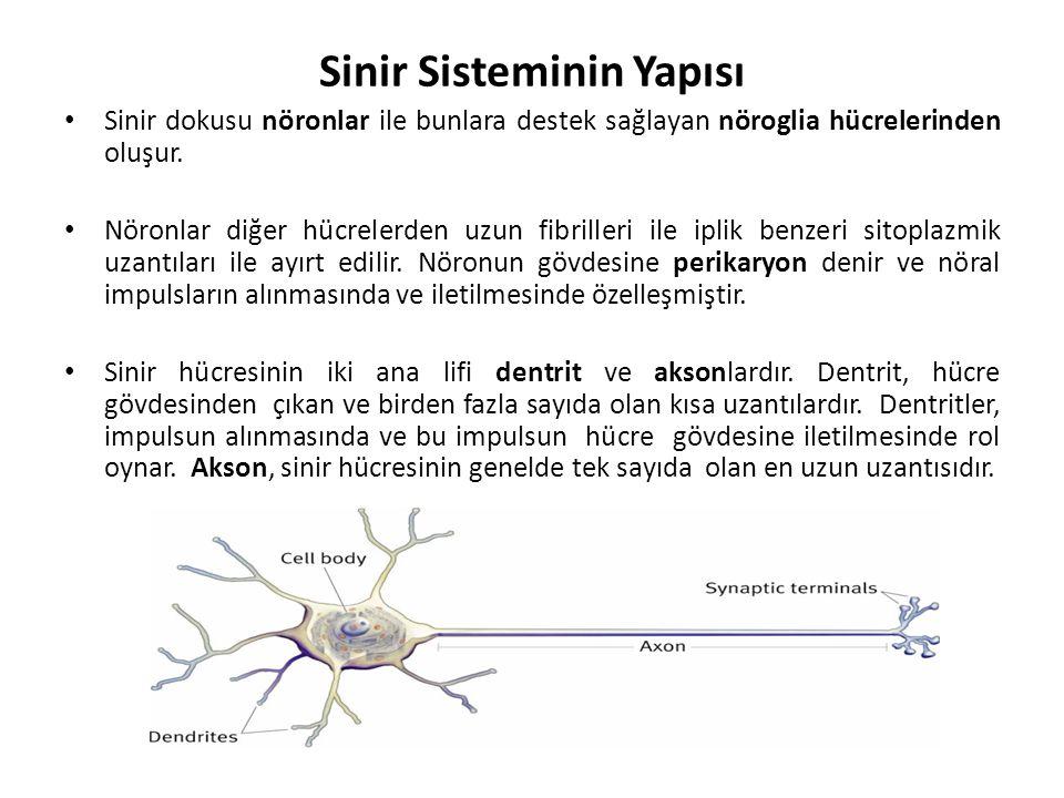 Sinir Sisteminin Yapısı Sinir dokusu nöronlar ile bunlara destek sağlayan nöroglia hücrelerinden oluşur.
