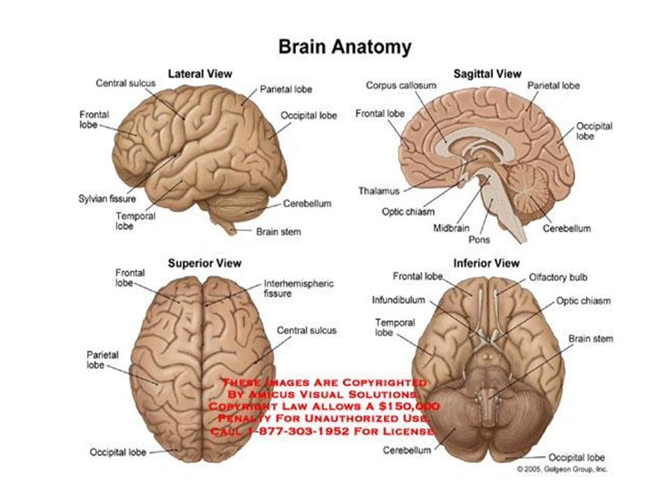 VII.N. facialis Motor, duyu ve parasempatik lifler taşır.