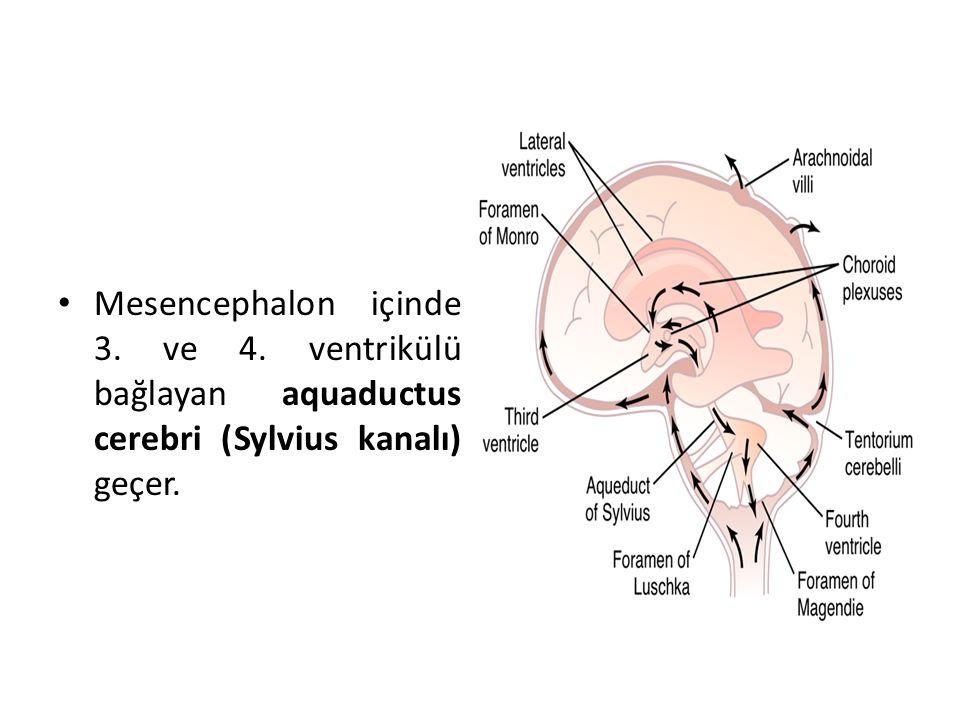 Mesencephalon içinde 3. ve 4. ventrikülü bağlayan aquaductus cerebri (Sylvius kanalı) geçer.