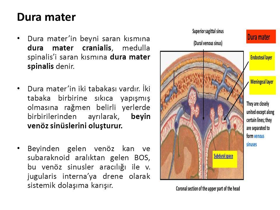 Dura mater Dura mater'in beyni saran kısmına dura mater cranialis, medulla spinalis'i saran kısmına dura mater spinalis denir.