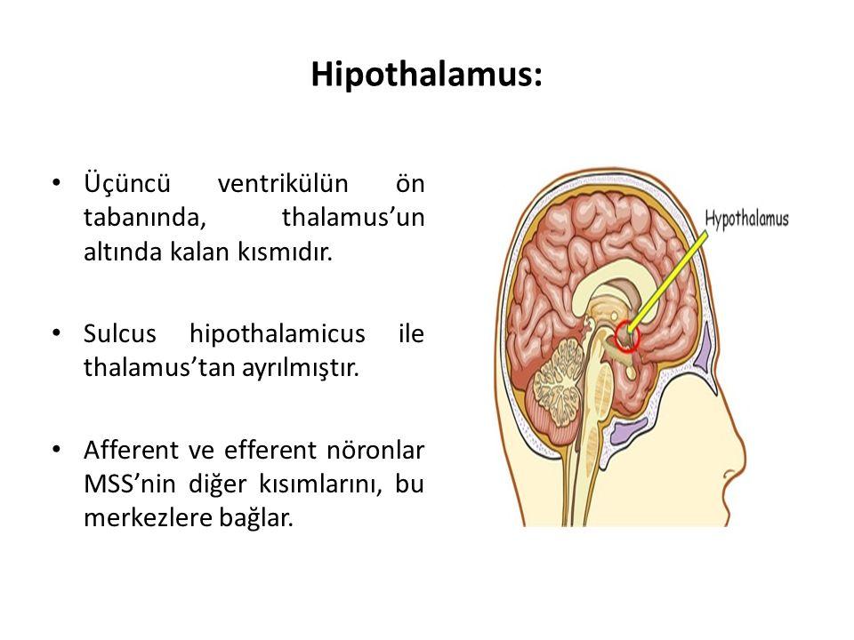 Hipothalamus: Üçüncü ventrikülün ön tabanında, thalamus'un altında kalan kısmıdır.