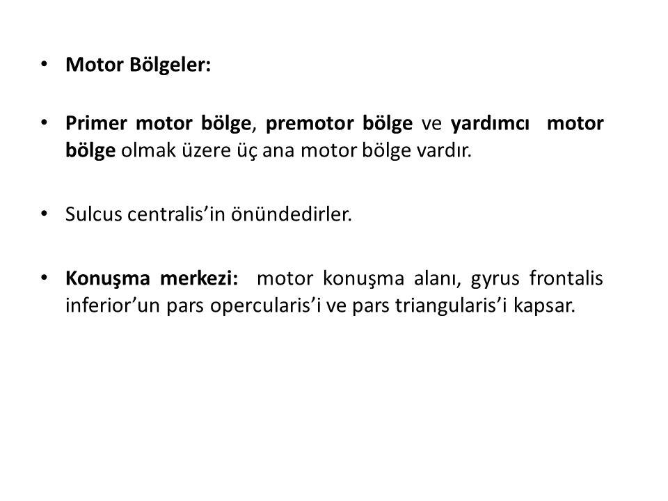 Motor Bölgeler: Primer motor bölge, premotor bölge ve yardımcı motor bölge olmak üzere üç ana motor bölge vardır.