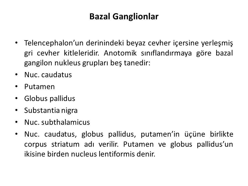 Bazal Ganglionlar Telencephalon'un derinindeki beyaz cevher içersine yerleşmiş gri cevher kitleleridir.