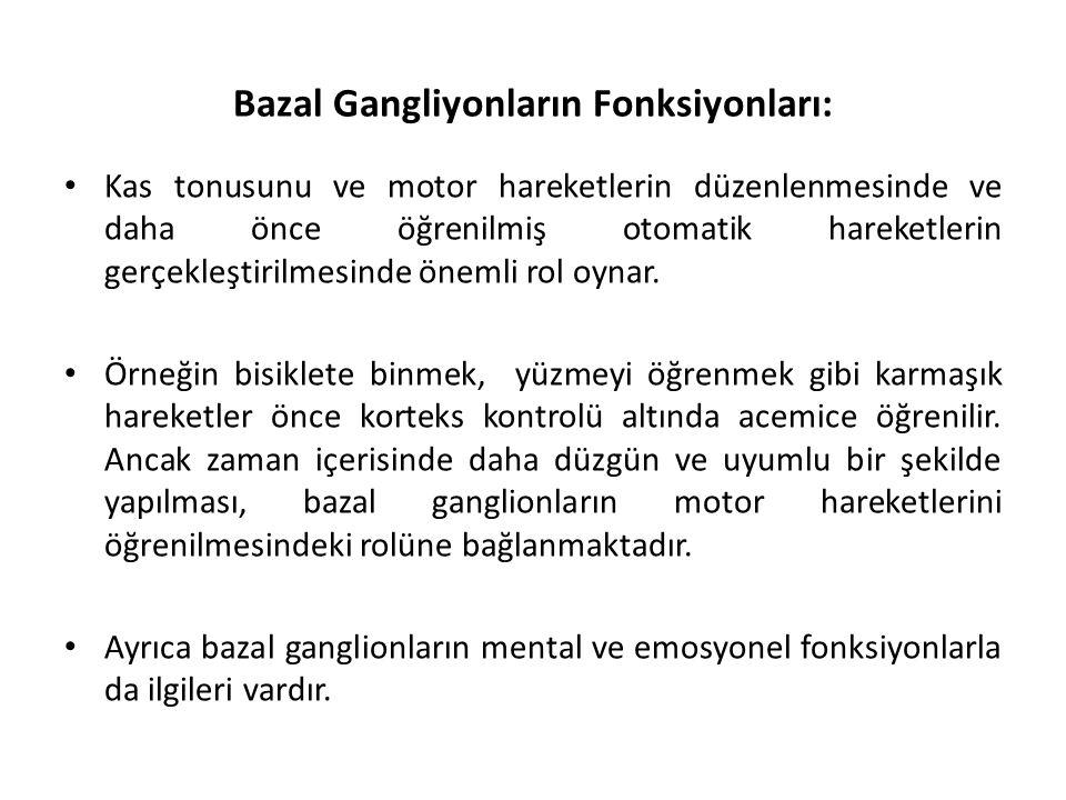 Bazal Gangliyonların Fonksiyonları: Kas tonusunu ve motor hareketlerin düzenlenmesinde ve daha önce öğrenilmiş otomatik hareketlerin gerçekleştirilmesinde önemli rol oynar.