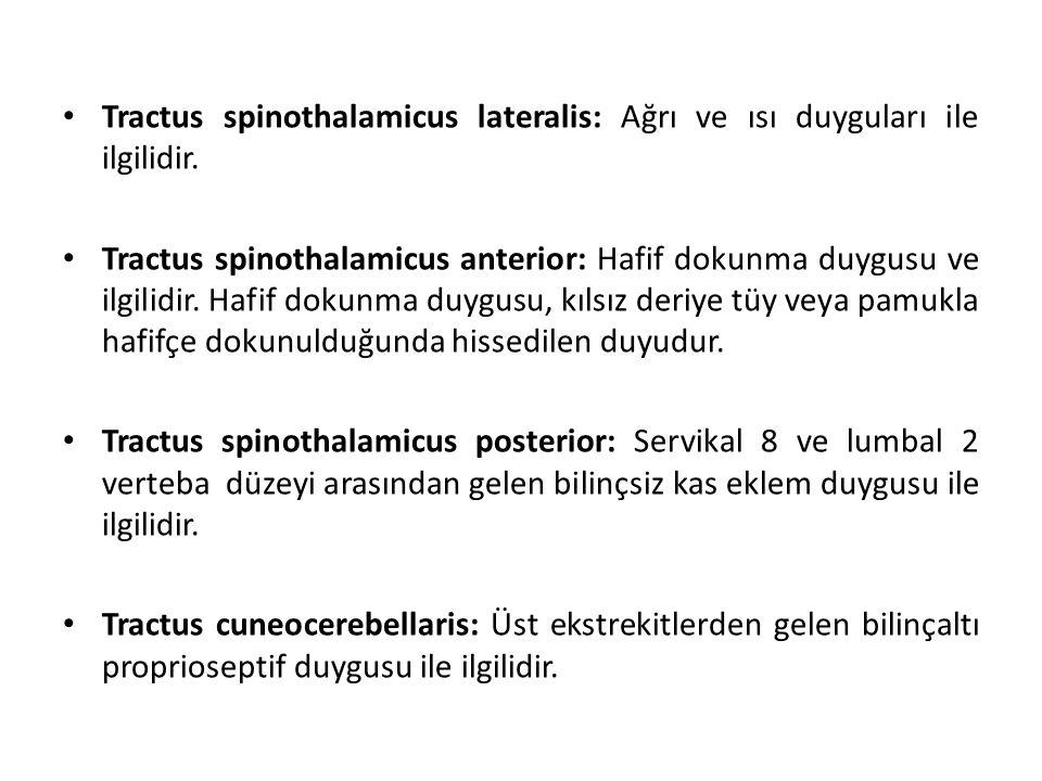 Tractus spinothalamicus lateralis: Ağrı ve ısı duyguları ile ilgilidir.