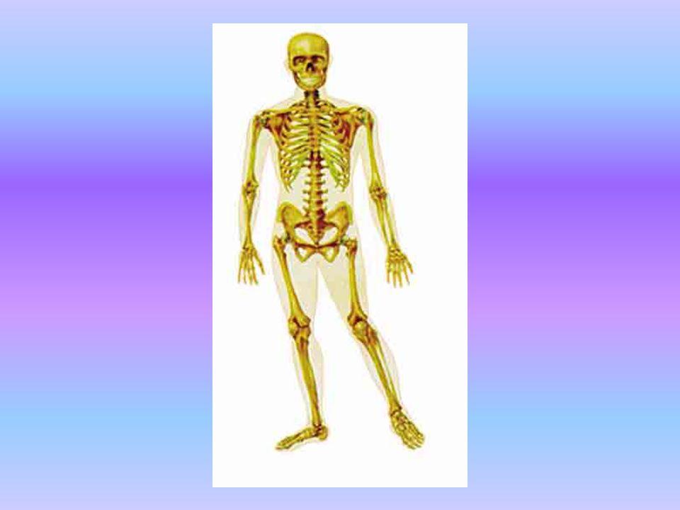 KEMİĞİN TÜMÖRE REAKSİYONU Kemik ve tümör arasındaki sınır radyografilerde görülür.