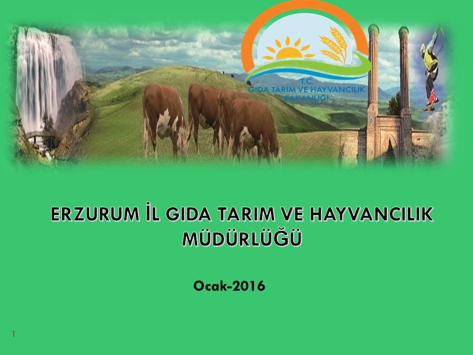 Hayvansal Üretim (2014) Süt Üretimi (ton)Et Üretimi (ton) Türkiye18.498.6301.008.272 Erzurum741.56111.892 Türkiye içindeki payı % 4,01,2 Ülkemiz süt üretimin yaklaşık % 4 ünü üreten ilimizde sütün sanayiye aktarılmasında sorunlar yaşanmakta, Et üretiminde yaklaşık 5-6 bin ton mezbahanelerde (11 adet) kesim gerçekleştirilmekte ilde de ğ erlendirilebilecek büyük potansiyel il dışına canlı hayvan olarak gönderilmektedir.
