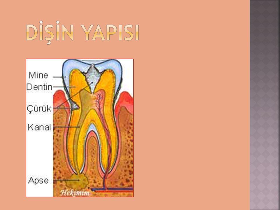  Günde iki kere dişlerimizi fırçalayarak  Her gün düzenli diş ipliği kullanarak  Başkasının diş fırçası ile dişlerimizi fırçalamayarak  Florürlü diş macunu kullanarak  Dişhekimine muntazam aralıklarla başvurarak diş çürümelerini önleyebiliriz.