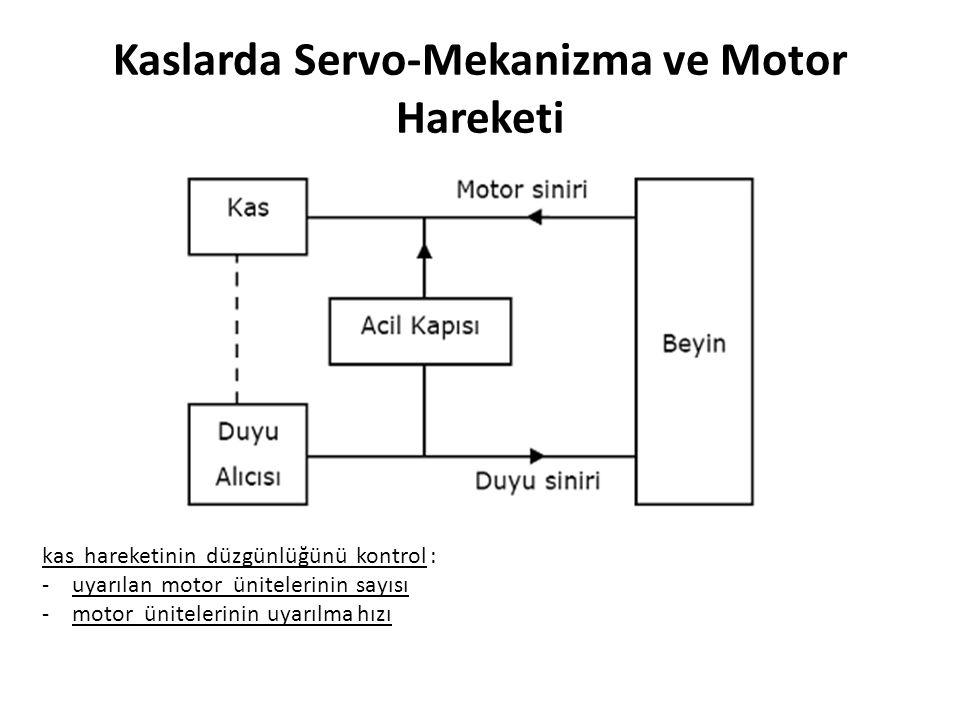 Kaslarda Servo-Mekanizma ve Motor Hareketi kas hareketinin düzgünlüğünü kontrol : -uyarılan motor ünitelerinin sayısı -motor ünitelerinin uyarılma hız