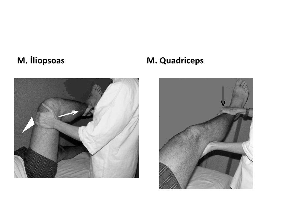 M. İliopsoasM. Quadriceps