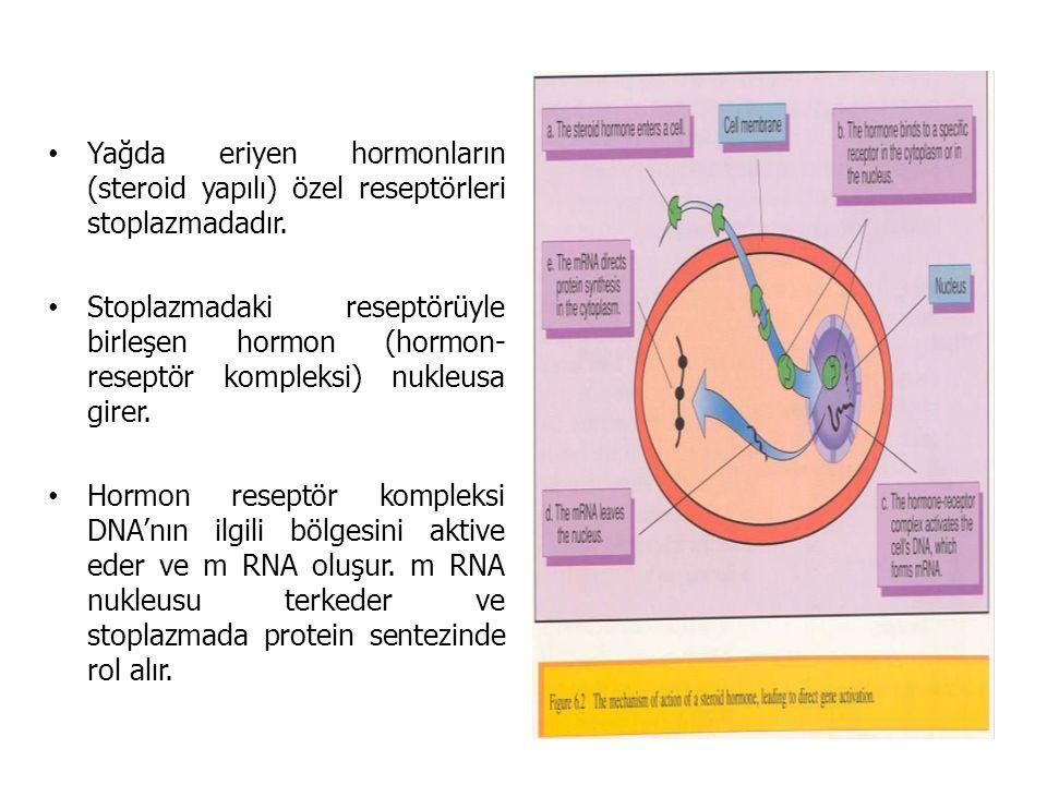 Yağda eriyen hormonların (steroid yapılı) özel reseptörleri stoplazmadadır. Stoplazmadaki reseptörüyle birleşen hormon (hormon- reseptör kompleksi) nu