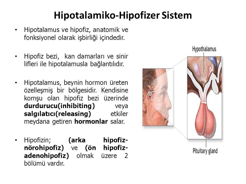 Hipotalamiko-Hipofizer Sistem Hipotalamus ve hipofiz, anatomik ve fonksiyonel olarak işbirliği içindedir. Hipofiz bezi, kan damarları ve sinir lifleri