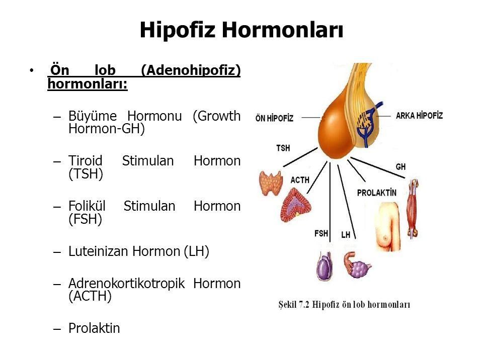 Hipofiz Hormonları Ön lob (Adenohipofiz) hormonları: – Büyüme Hormonu (Growth Hormon-GH) – Tiroid Stimulan Hormon (TSH) – Folikül Stimulan Hormon (FSH) – Luteinizan Hormon (LH) – Adrenokortikotropik Hormon (ACTH) – Prolaktin