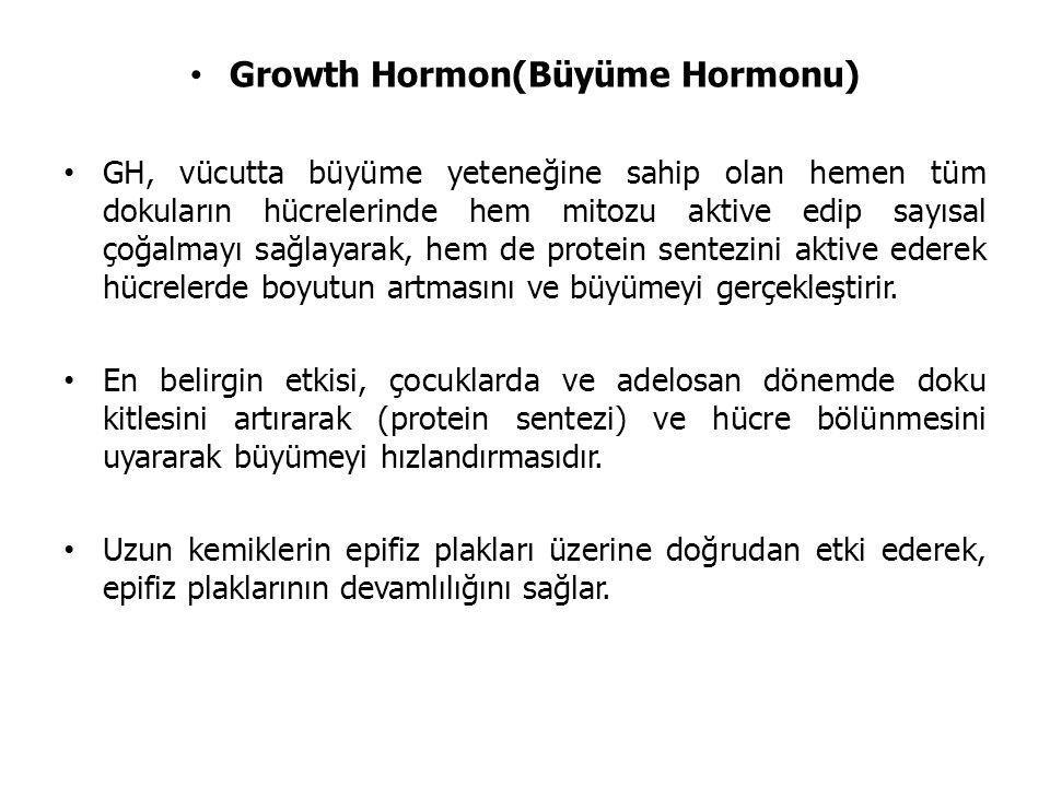 Growth Hormon(Büyüme Hormonu) GH, vücutta büyüme yeteneğine sahip olan hemen tüm dokuların hücrelerinde hem mitozu aktive edip sayısal çoğalmayı sağlayarak, hem de protein sentezini aktive ederek hücrelerde boyutun artmasını ve büyümeyi gerçekleştirir.