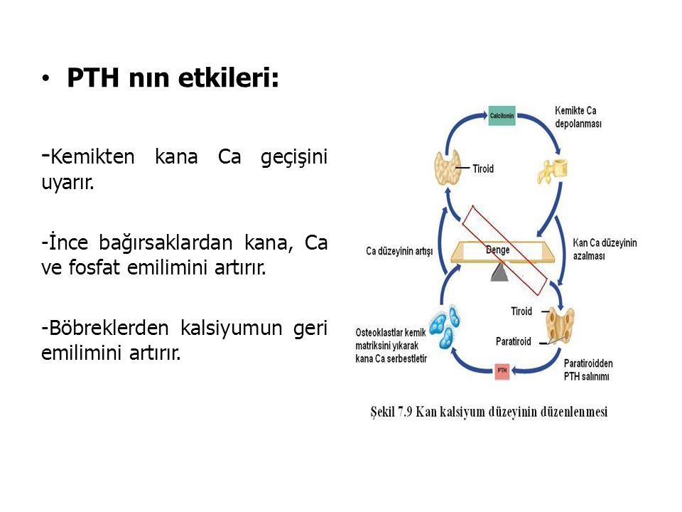 PTH nın etkileri: - Kemikten kana Ca geçişini uyarır. -İnce bağırsaklardan kana, Ca ve fosfat emilimini artırır. -Böbreklerden kalsiyumun geri emilimi