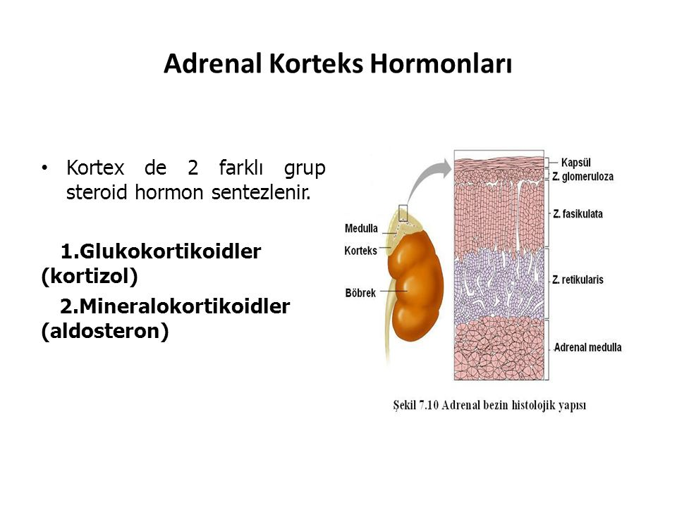 Adrenal Korteks Hormonları Kortex de 2 farklı grup steroid hormon sentezlenir. 1.Glukokortikoidler (kortizol) 2.Mineralokortikoidler (aldosteron)