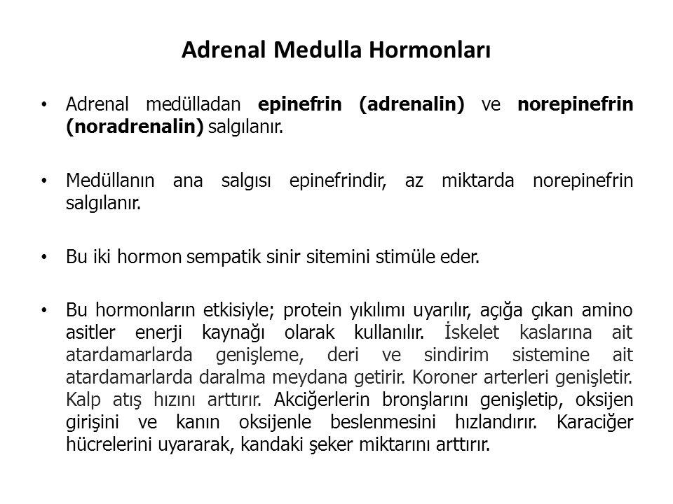 Adrenal Medulla Hormonları Adrenal medülladan epinefrin (adrenalin) ve norepinefrin (noradrenalin) salgılanır. Medüllanın ana salgısı epinefrindir, az
