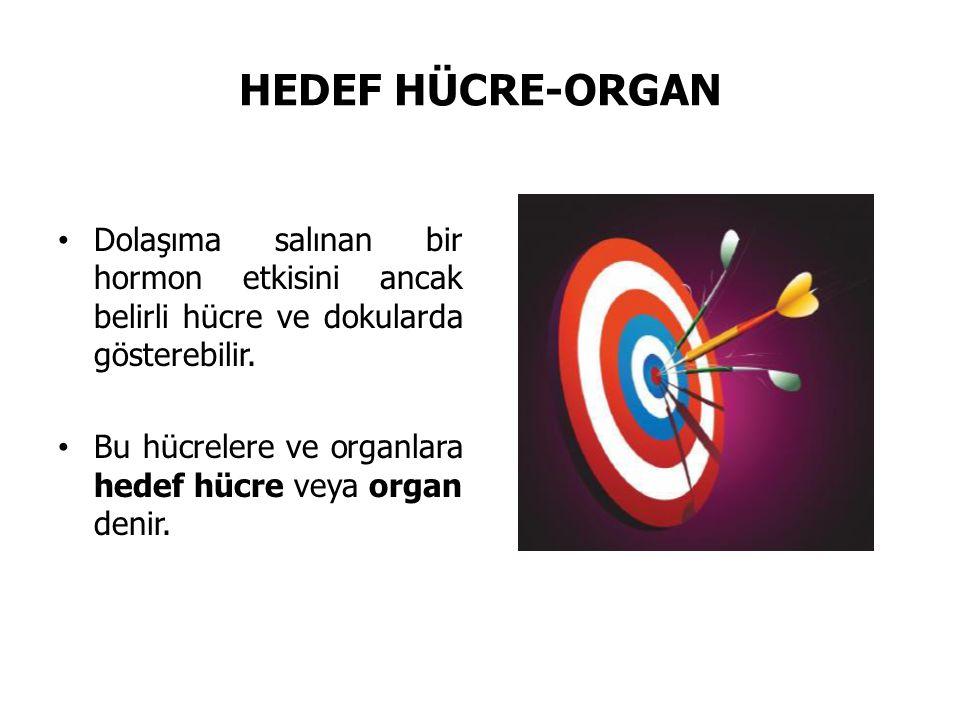 HEDEF HÜCRE-ORGAN Dolaşıma salınan bir hormon etkisini ancak belirli hücre ve dokularda gösterebilir. Bu hücrelere ve organlara hedef hücre veya organ